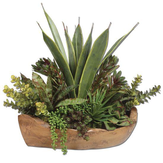 Salar Succulents Teak Bowl in Brown