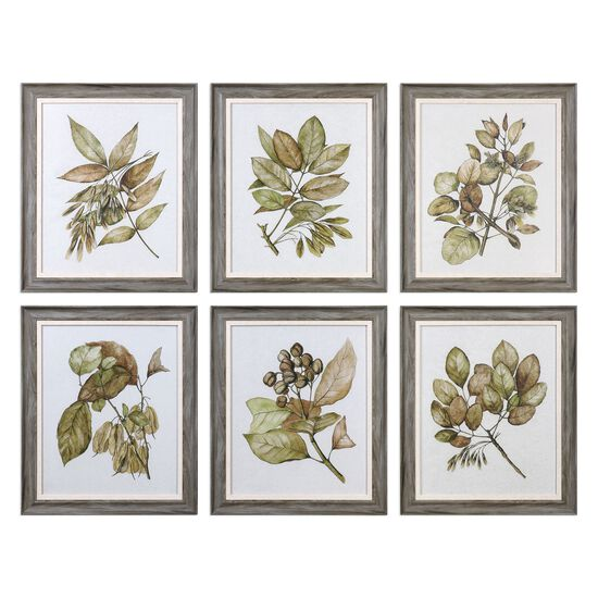 Six-Piece Framed Seedlings Printed Wall Art Set