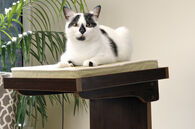 MB Home Golden Gate Espresso Adjustable Height Cat Tower