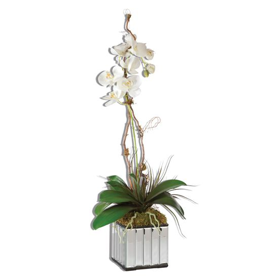 Kaleama Orchids Cube Container