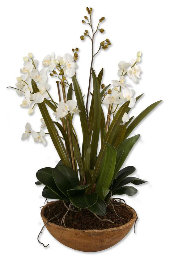 Moth Orchid Planterin Natural Brown
