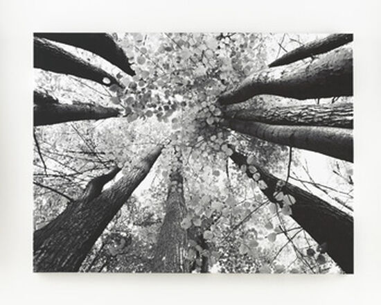 Contemporary Trees Canvas Wall Art in Black/White