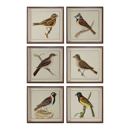 Six-Piece Framed Bird Printed Wall Art Set
