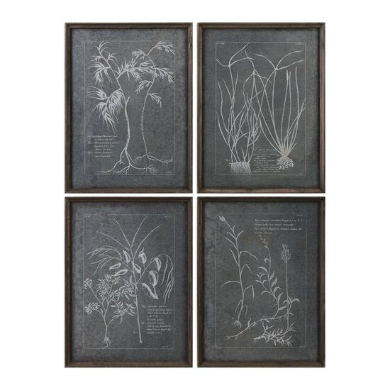 Set of Four Root Printed Framed Wall Art Set