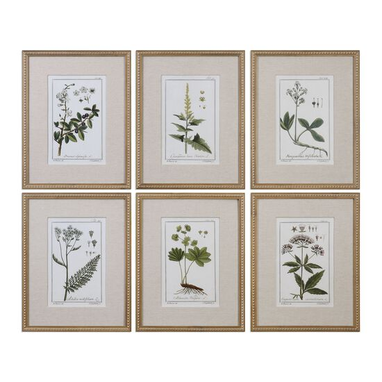 Six-Piece Floral Botanical Study Printed Wall Art Set
