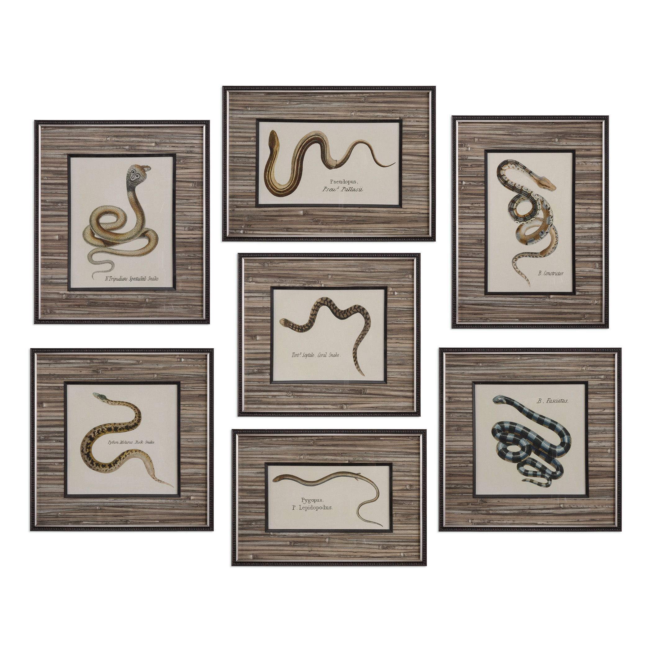Seven-Piece Snakes Printed Wall Art Set  sc 1 st  Mathis Brothers & Wall Decor | Mathis Brothers Furniture
